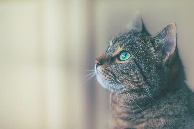 Mèo có khả năng nhìn thấy và tấn công ma quỷ